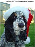 Miss Chelsea Rose Love, veteran Santa hat model