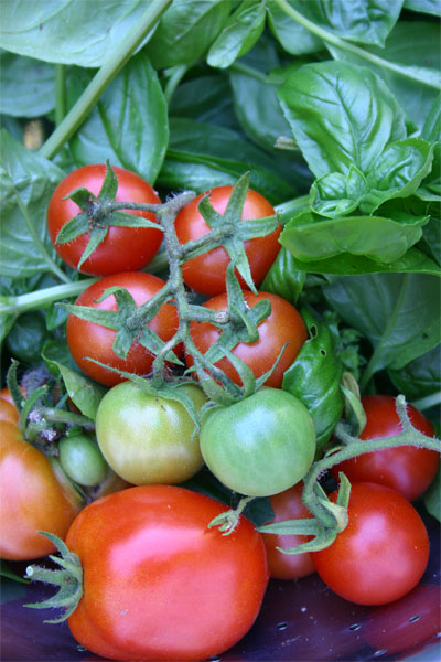09.01-tomatoes