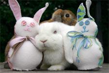 Wee-Bunnies-1
