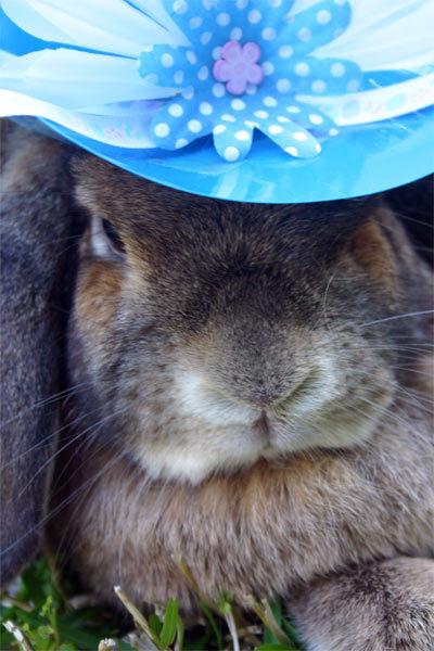 Bunnybonnets5