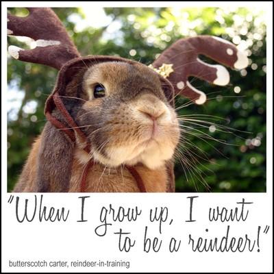 Butterscotch_reindeer_in_training_2