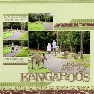 Kangaroosweb